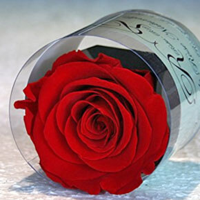 Regalo original rosa eterna